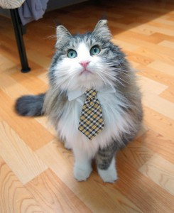 cute_cat_ready_for_office